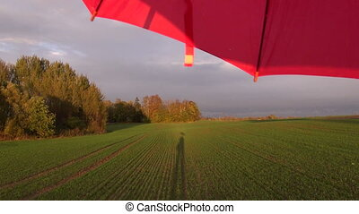 red umbrella after rain and field - red umbrella after rain...