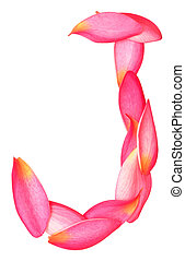 letter j - letter J made from beauty flower petals on white