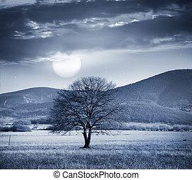 um, árvore, cheio, lua