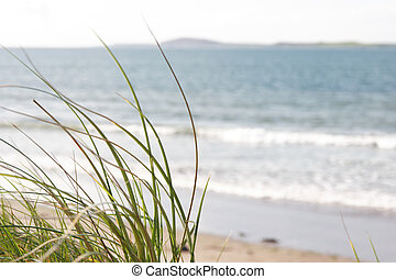 sand dune grass view - tall grass on the sand dunes in kerry...