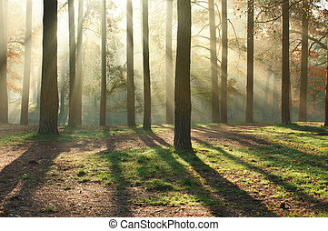 Sun rays in the forest - Beautiful sun rays in the morning...