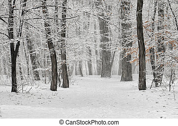 Winter scene - Winter in the park with falling snow