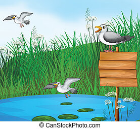 Three birds at the pond with a signboard