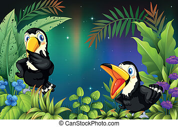 Two birds at the rainforest - Illustration of two birds at...