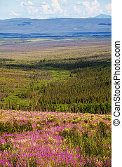 Tundra on Alaska - tundra in Alaska