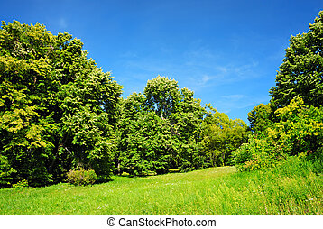 Green trees and blue sky. Summer landscape