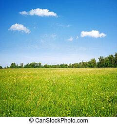 azul, campo, flores, cielo