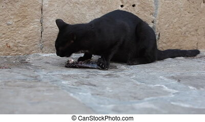 Black cat eating a fish