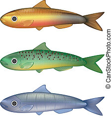 Colorful fish vector illustration