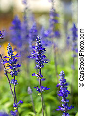 Purple flowers in full bloom beautiful sunlight.