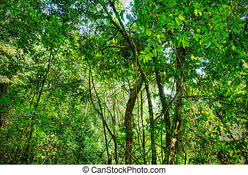 Sacred African rainforest, tropical jungle