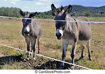 donkeys in pre