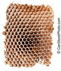 巢, 空, 細節, 大黃蜂
