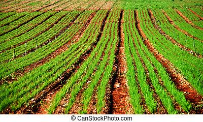 Farm field - A typical farm field