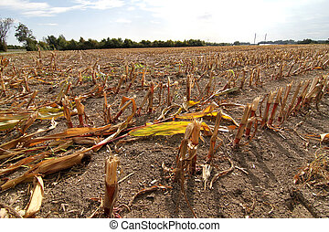 Dry field - A dry field after the harvest.