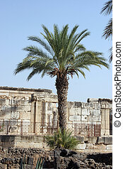 Capernaum, Israel  - Capernaum, Ruins of the old Roman town