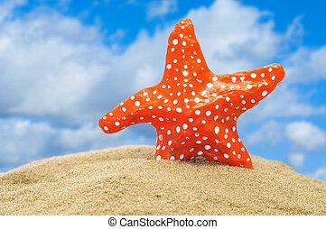 seastar - closeup of a seastar on the sand of a beach