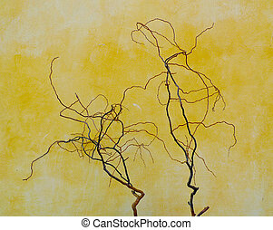 Twisted branches - Bare twisted branches against a weathered...