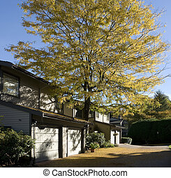 Townhouses in the city, residential area in Burnaby, BC