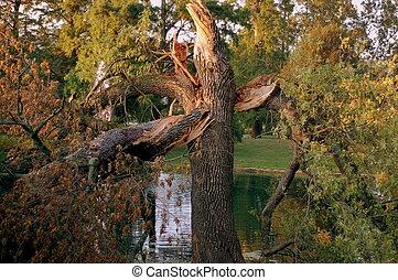 hurricane twisted tree - hurricane wind damage in Cincinnati...