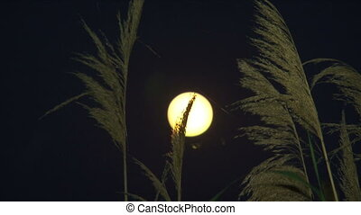 Full moon viewed from a field
