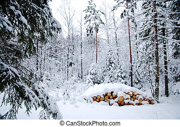 Snowy logpile in winter forest