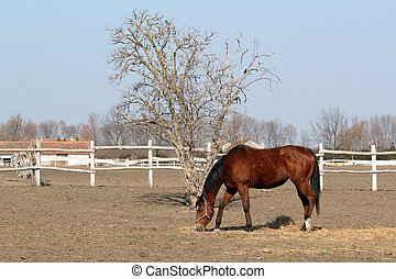 brown horse in corral ranch scene