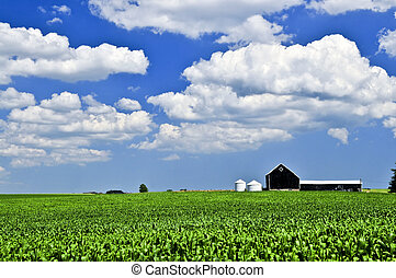 Rural landscape - Rural summer landscape with green corn...