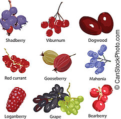 set of different berries on a white background
