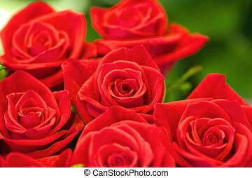 vivid red rose bouquet - this photo is taken in flower shop...