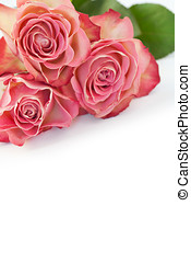 Pink roses - Bunch of pink roses on white background with...