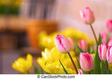 pink tulip bud and yellow flowers - this photo is taken in...