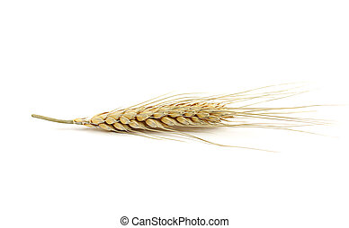 Ear of wheat isolated on white background