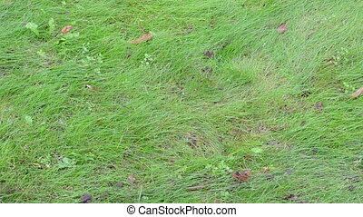 meadow leaves fall autumn - green meadow lawn grass closeup...