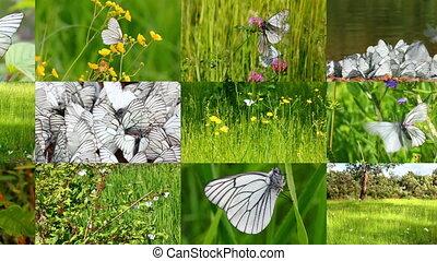 set of many beautiful butterflys and ladybugs