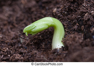 Germination - Germination of small plant