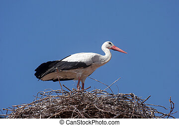 Stork in its nest  - Stork in its nest