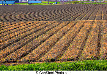 Plowed field at spring
