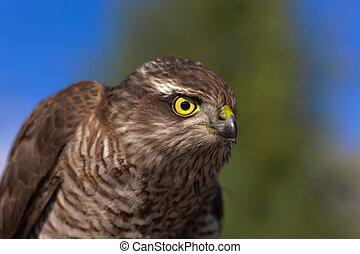 bird of prey closeup