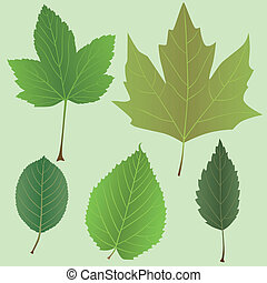 Vector green leaves set
