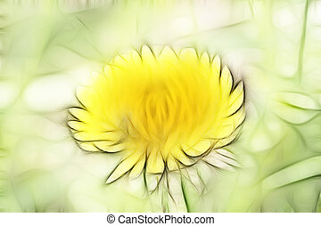 dandelion - Abstract image - the bloom of dandelion