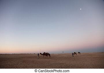Morning in Sahara desert