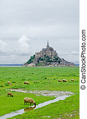 Sheep drinking and other grazing near Mont Saint Michel landmark. Normandy, France, Europe.
