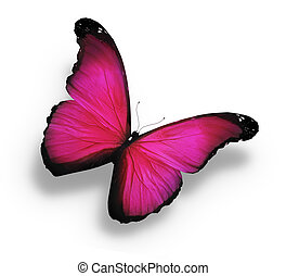 Morpho pink butterfly , isolated on white