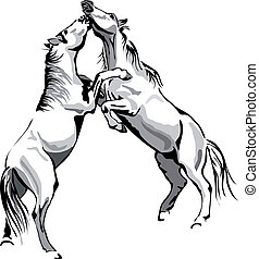 fighting horses - black and white vector outline