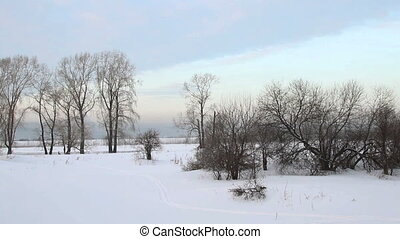Winter Forest - Panorama of the winter forest