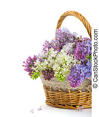 Lilacs in a basket on a white background