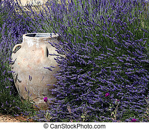 Jar and Lavender - A traditional ornamental jar amidst lush...