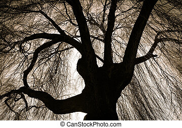Scary Weeping Willow Tree