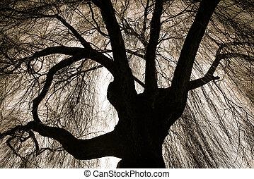 ijedős, sírás-rívás, fűzfa, fa